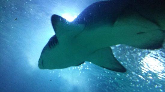 Oceanografic : Dichtbij de haaien......cool
