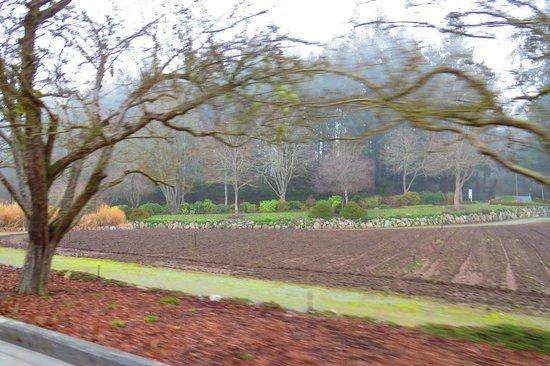 Butchart Gardens: OK , It's Winter !!!