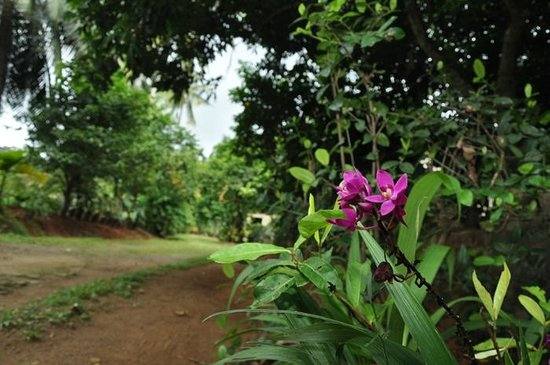 Green View Home Stay : Garden