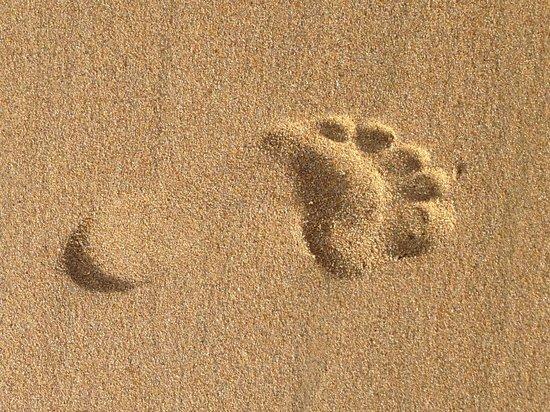 Pelican Sands: Footprint