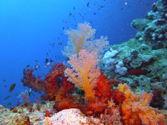 Tropitel Dahab Oasis: Unterwasser gibt es eine reiche Farbenbracht