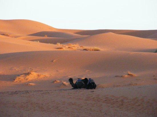 Tour in Marocco : Solitudine mattutina