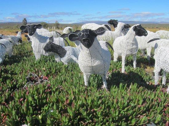 Karoo 1 - Hotel Village: Les moutons du patron