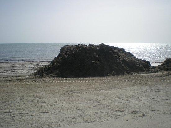 El Mouradi Djerba Menzel: alghe ammucchiate bellissima vista.....!!!