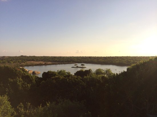 Cinnamon Wild Yala : View from bar