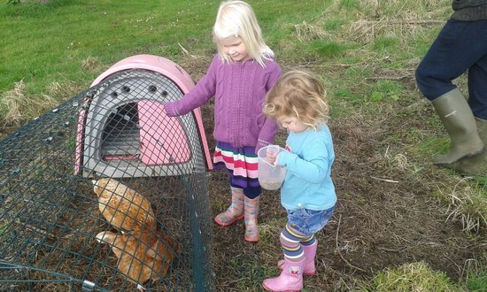 Saunton Sands Farm: Feeding the chickens at Willowfield