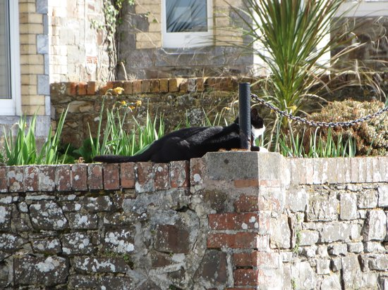 The Grosvenor Guest House: Fonzie the hotel cat