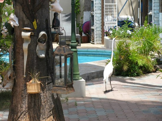 Aruba Sunset Beach Studios: A visitor by the pool