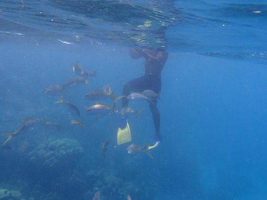 Iberostar Costa Dorada : Snorkling on VIP excursion