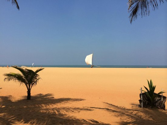 Jetwing Blue: beach area