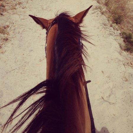 Blazing Saddles: Riding!!