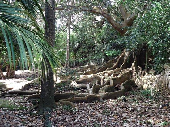 Jose do Canto Botanical Garden: A Real Treat to Visit
