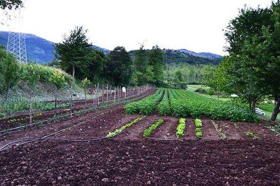 Il nostro orto picture of il giardino dei ciliegi sanza tripadvisor - Agriturismo il giardino dei ciliegi ...