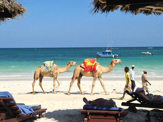 Southern Palms Beach Resort : beach