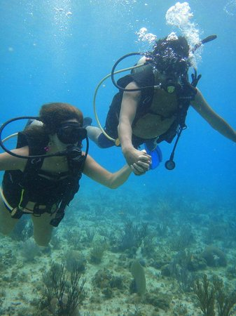 Paradise Dive Shop : maravillados