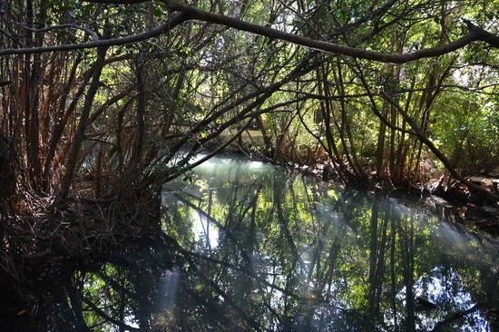 Sandos Caracol Eco Resort: une mangrove au sein de l'hôtel