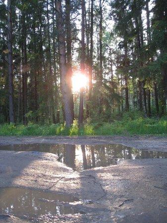 Kimrsky District, Rosja: Лес (около пос.Белый Городок)