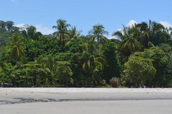 Playa Manuel Antonio : View of beach from water