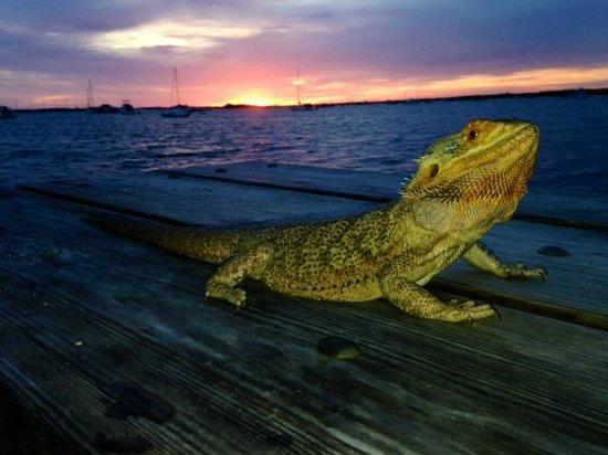 Boyd's Key West Campground: Sunrise