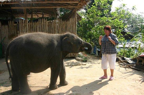 Patara Elephant Farm - Private Tours : Тайланд