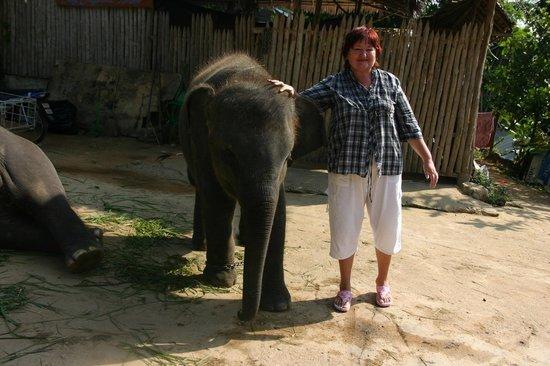 Patara Elephant Farm - Private Tours : Слоненок на ферме