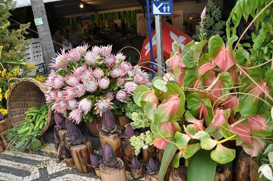 Monte Palace Tropical Garden : Необыкновенные цветы Мадейры