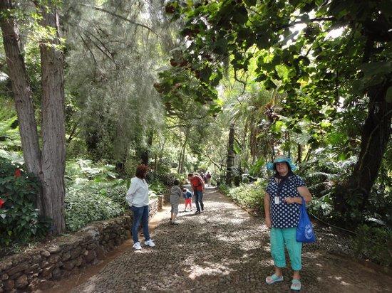 Monte Palace Tropical Garden : Аллея ботанического сада