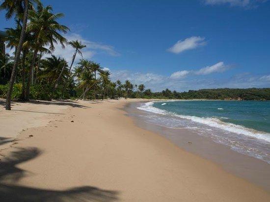 Hyatt Hacienda Del Mar: Beach scene