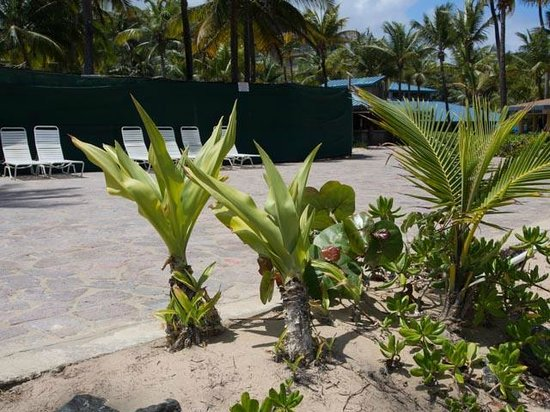 Hyatt Hacienda Del Mar: Large tiled area around pool, playground, grill, hot tub