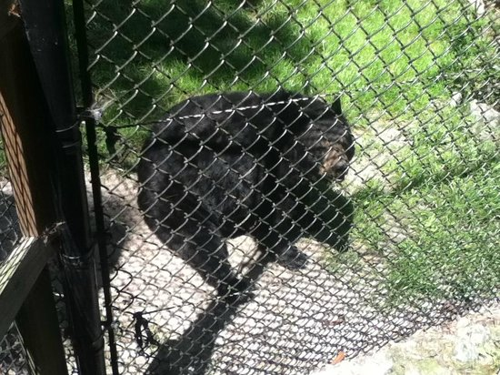 Ellie Schiller Homosassa Springs Wildlife State Park : The story of the bears is great, be sure to ask!