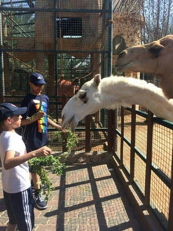 Emirates Park Zoo: feeding