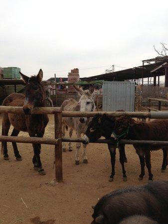 Nerja Donkey Sanctuary : I hear a bucket of food