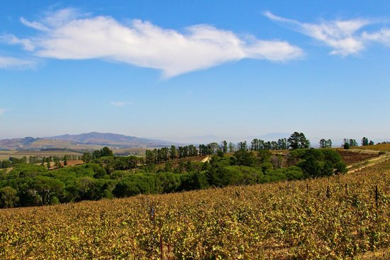 Warwick Wine Estate: Landscape View