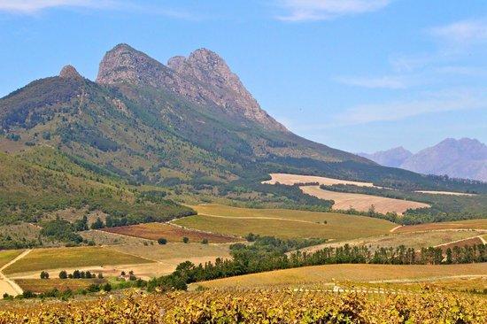 Warwick Wine Estate: Landscape View