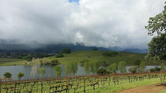 Quintessa Winery: Quintessa vineyard view