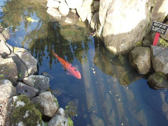 Spirit Mountain Casino Lodge : a fish that swims in the little manmade creek flowing from the fountain/casino entrance