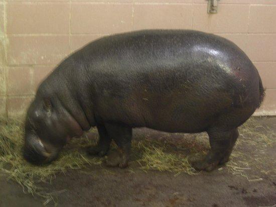 Edinburgh Zoo: Bit smelly...lol