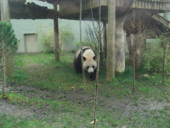 Edinburgh Zoo: Very cute