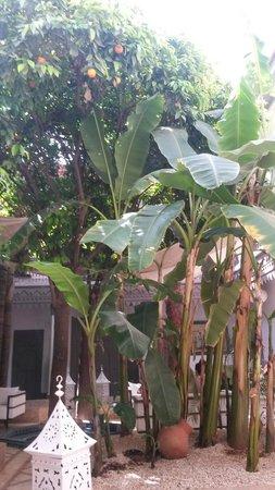 Les Jardins D Henia