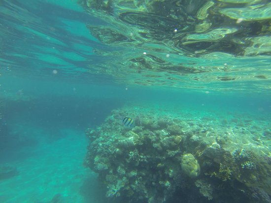 Hilton Sharks Bay Resort : Snorkeling