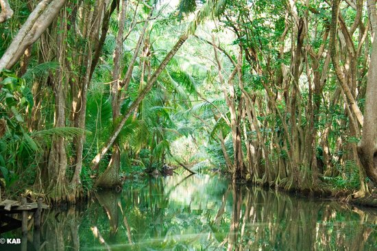Indian River: Beautiful rowboat ride through rainforest (by a guide)