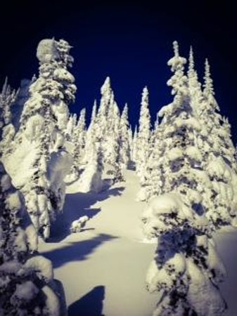 Great Northern Powder Guides: Awesome tree runs