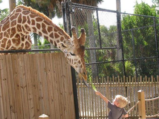 Naples Zoo at Caribbean Gardens : At the Naples Zoo