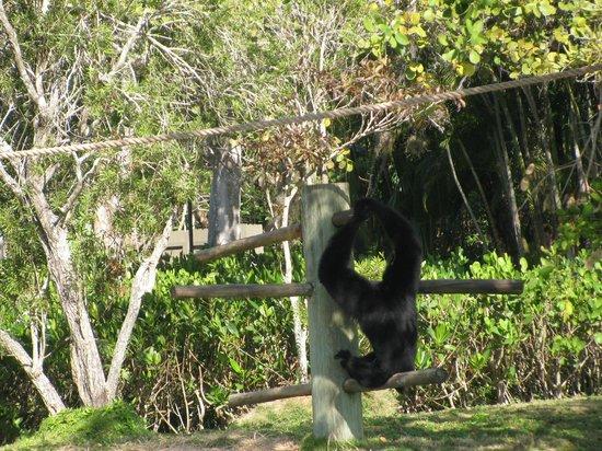 Naples Zoo at Caribbean Gardens : Looking at the monkeys