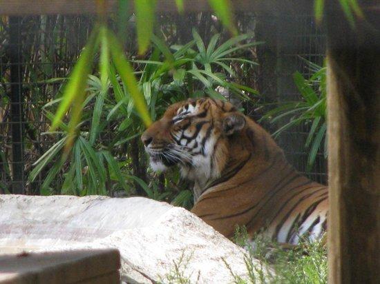 Naples Zoo at Caribbean Gardens : Zoo