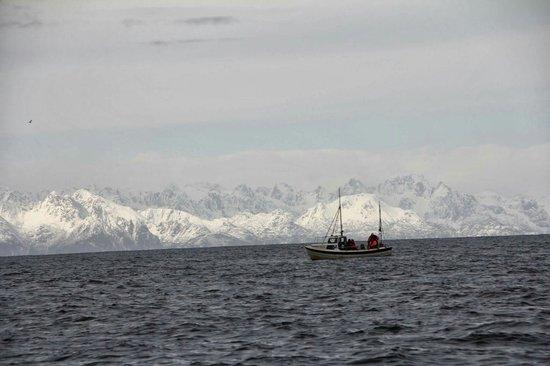 Steigen Sjoehus: Fiskeplass med utsikt mot Lofoten!