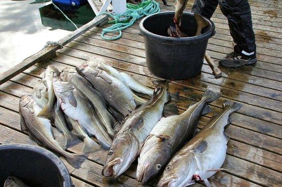 Steigen Sjoehus: Litt av dagens fangst!