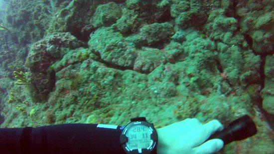 Atlantis Diving Lanzarote: Suunto Viper Air, My computer