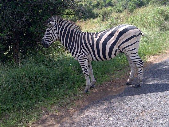 Protea Hotel Hluhluwe & Safaris: hluhluwe game reserve