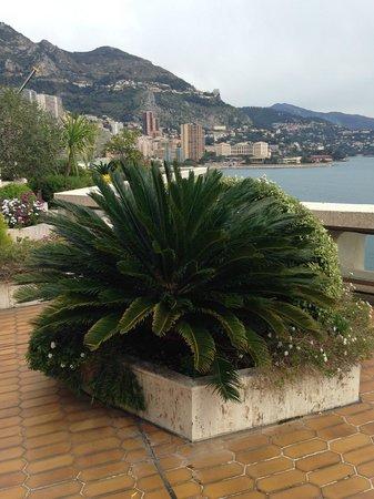 Fairmont Monte Carlo: Куст на террасе